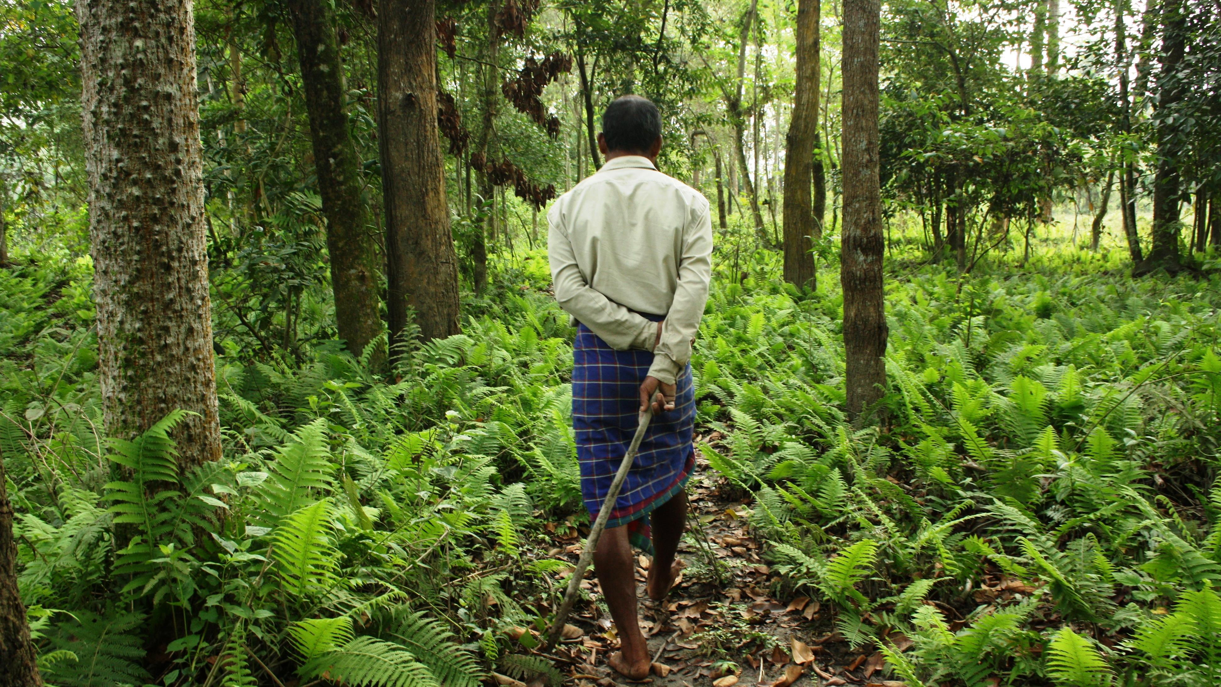 Hombre bosque