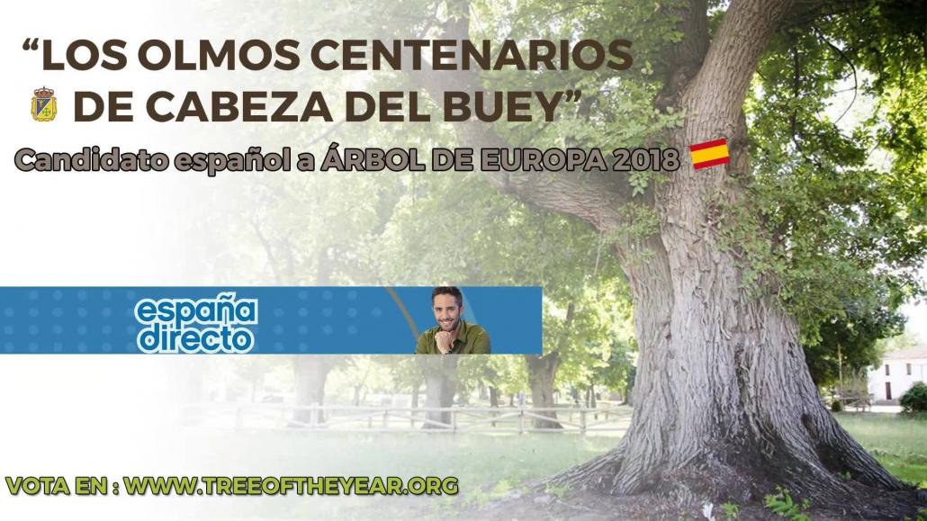 Los Olmos Centenarios de Cabeza del Buey en España Directo.